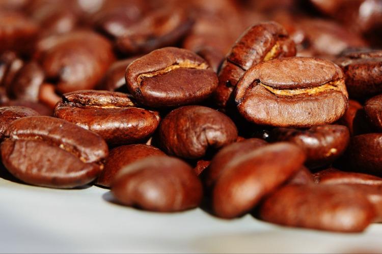 Freddissimo Kft - kávé